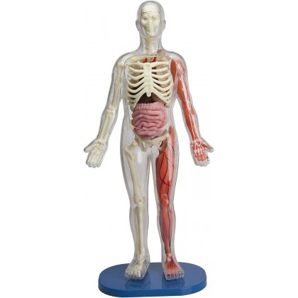 [Ready Stock ] SmartLab Toys Amazing Squishy Human Body
